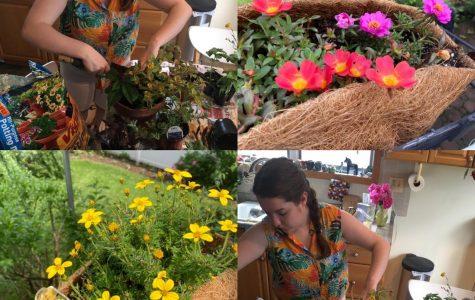 Gardening During Quarantine