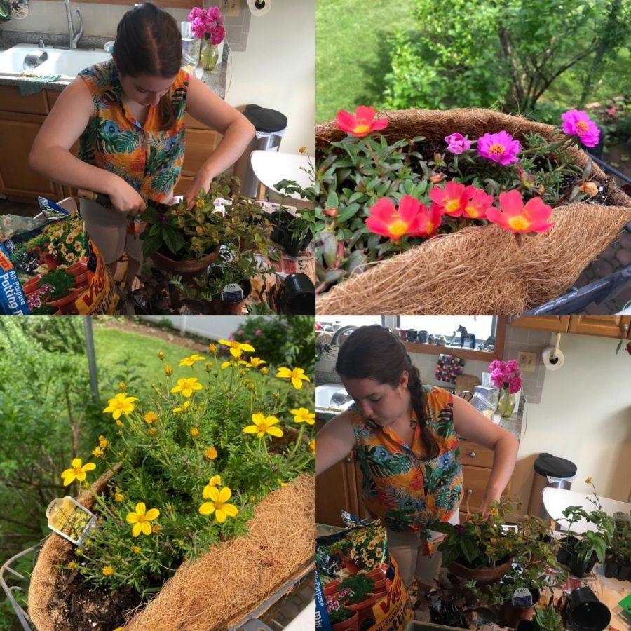 Gardening+During+Quarantine