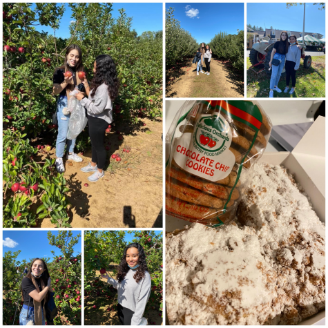 Apple Picking, Treats and Sweets